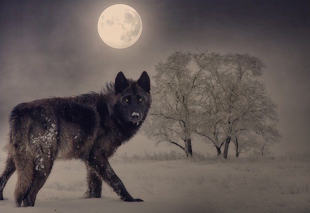 What is a Wolf Moon? The Full Moon's Name & Meaning