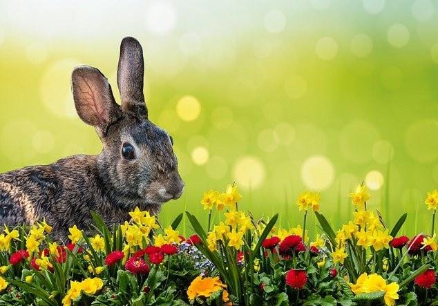 The Spring Equinox | Celebrating Ostara
