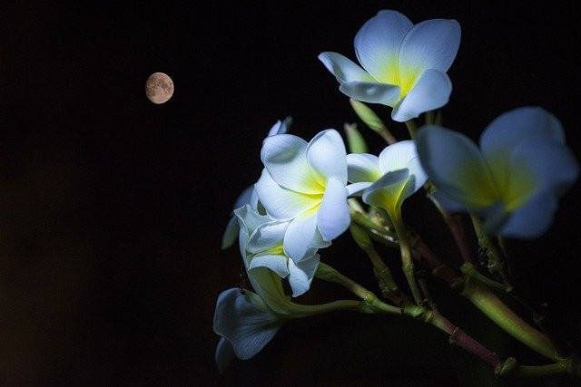 May 2021 Full Flower Moon | A Lunar Eclipse & Supermoon