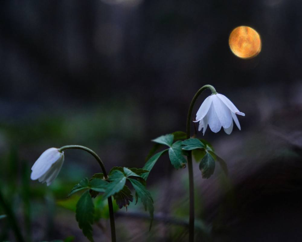 What is a Flower Moon? The May Full Moon's Name & Meaning