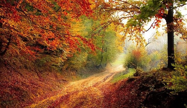 Peaceful dirt road leading through the woods in autumn