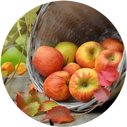 Fall apples in a basket